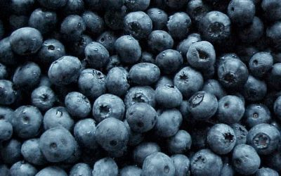 On Blueberries and Becoming Indigenous