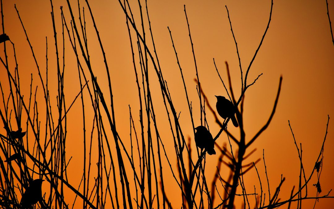 Singing in the Dusk